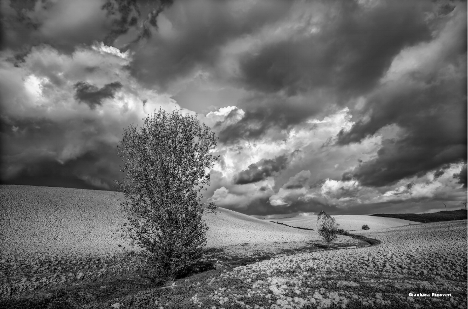 Tuscany's hills in B&W # 33