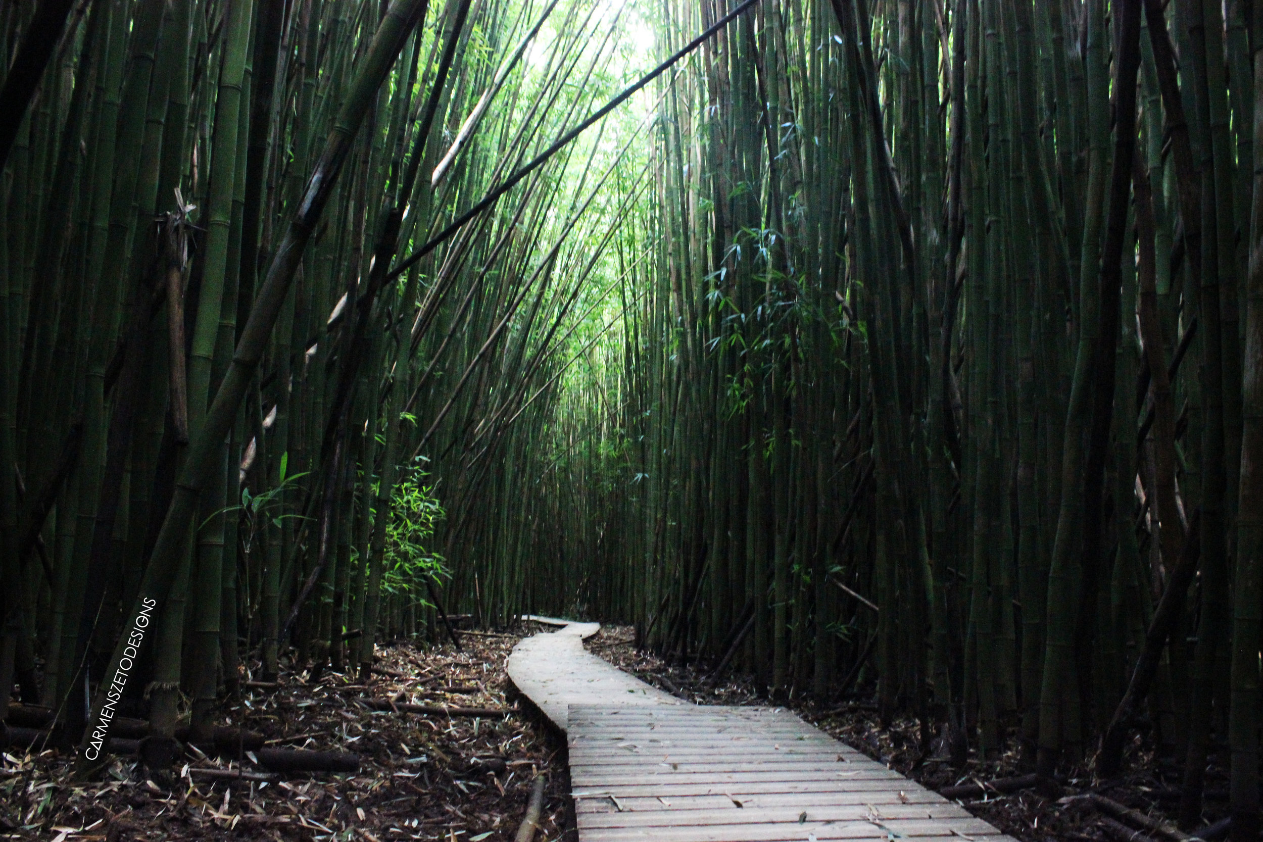 Bamboo Forest Hike in Haleakala National Park.