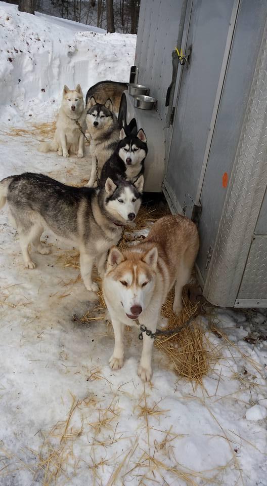 Robertas Dogs.jpg