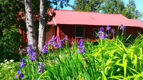 Iris Cottage from Back parking.png