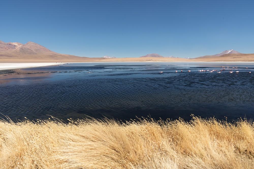 Laguna Cañapa D02_0183_tn.jpg