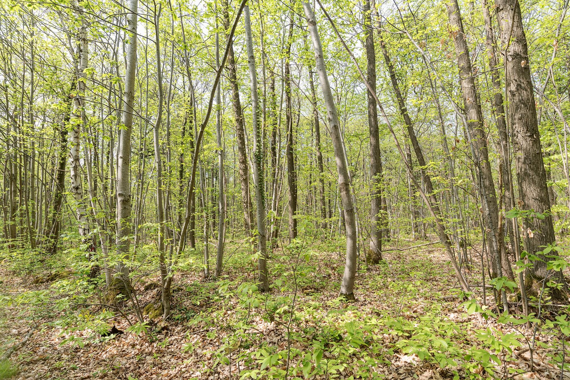 Forêt domaniale de Meudon.jpg