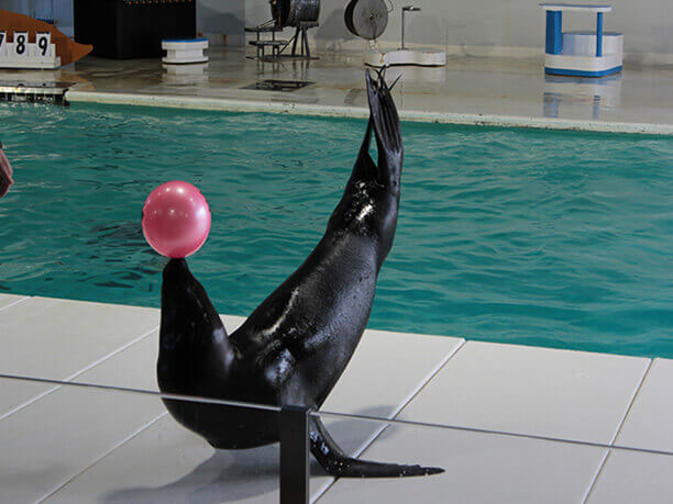 seal with ball.jpeg