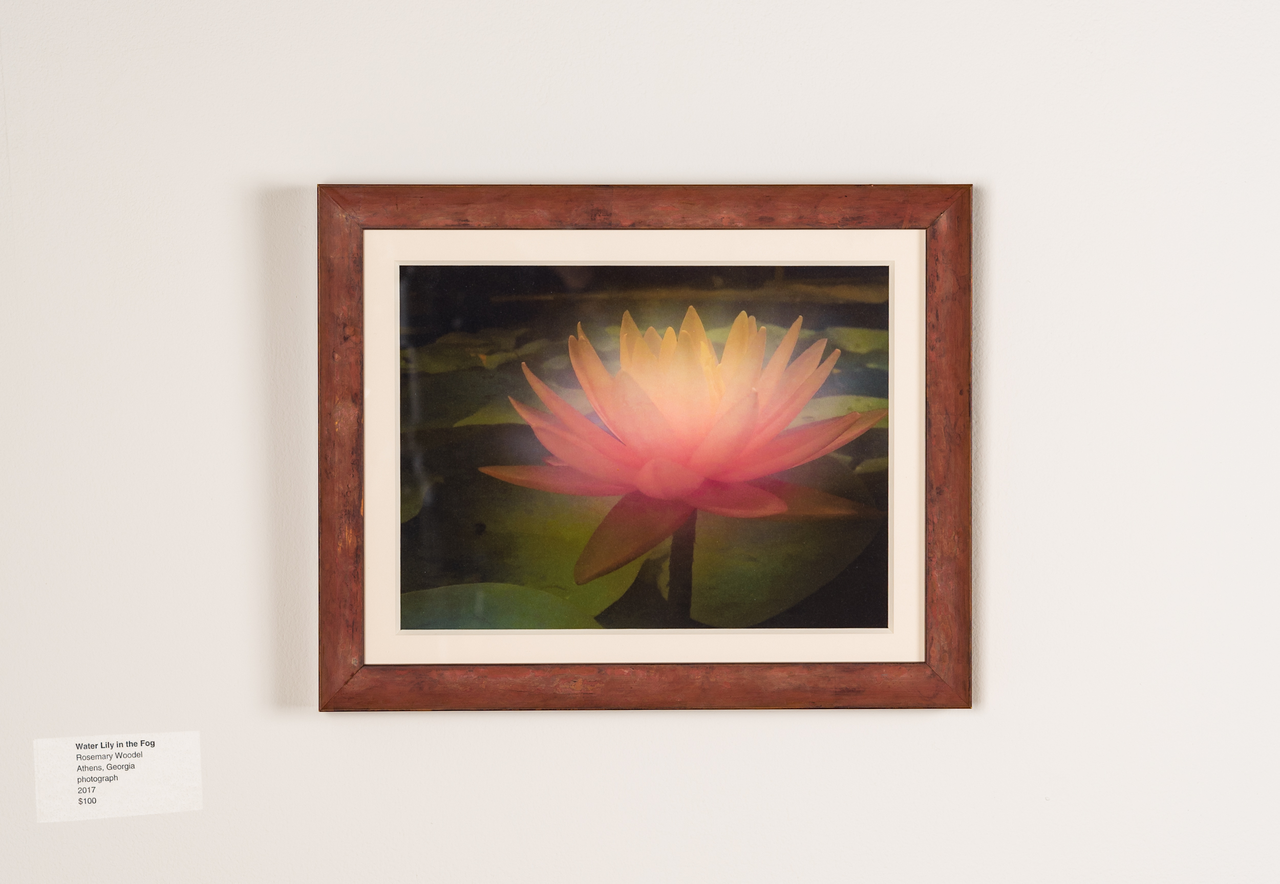 Water Lily in the Fog Rosemary Woodel  Athens  GA Photograph  2017 $100