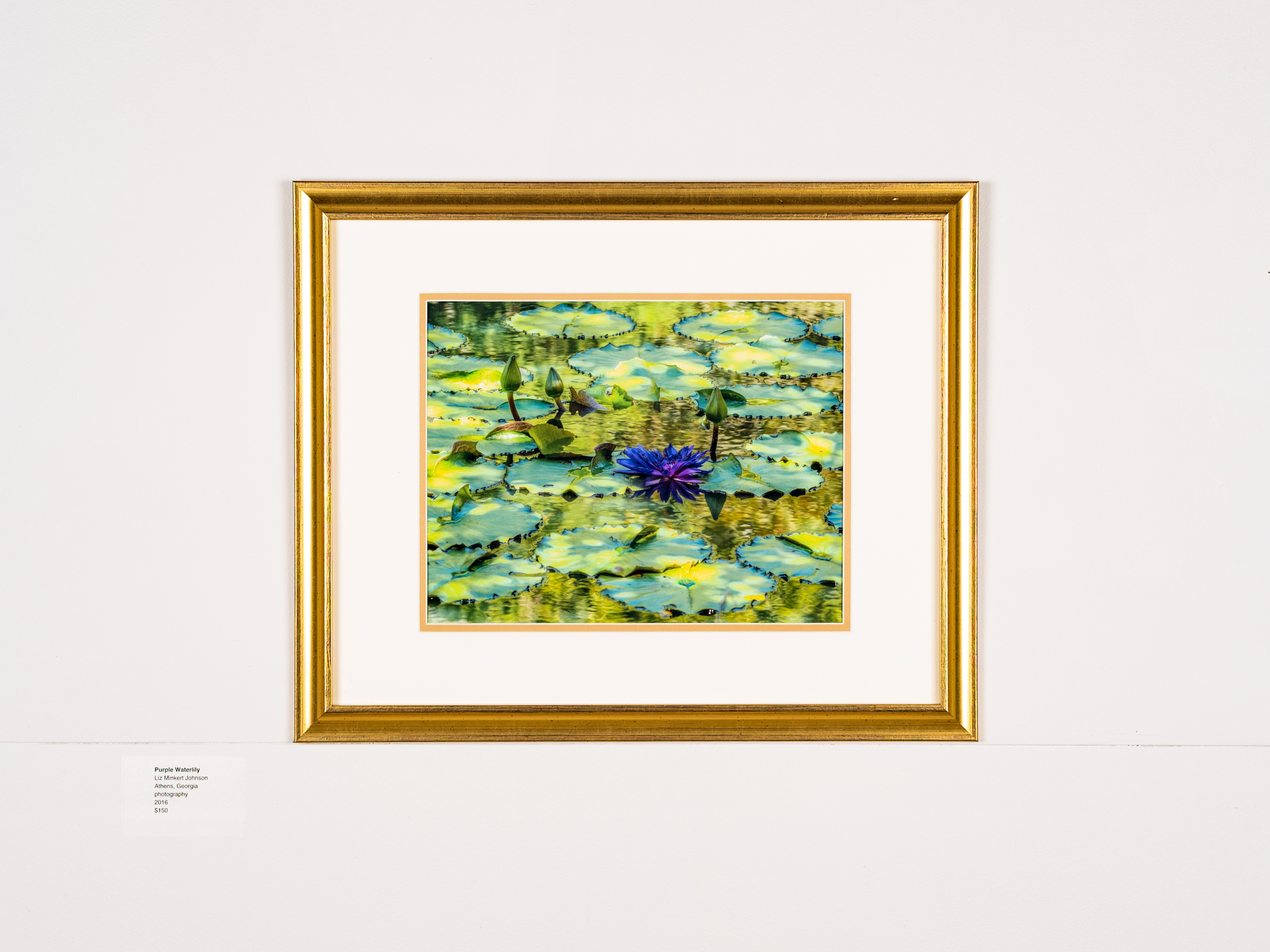 Purple Waterlily Liz Minkert Johnson    Athens  GA Photography  2016 $150
