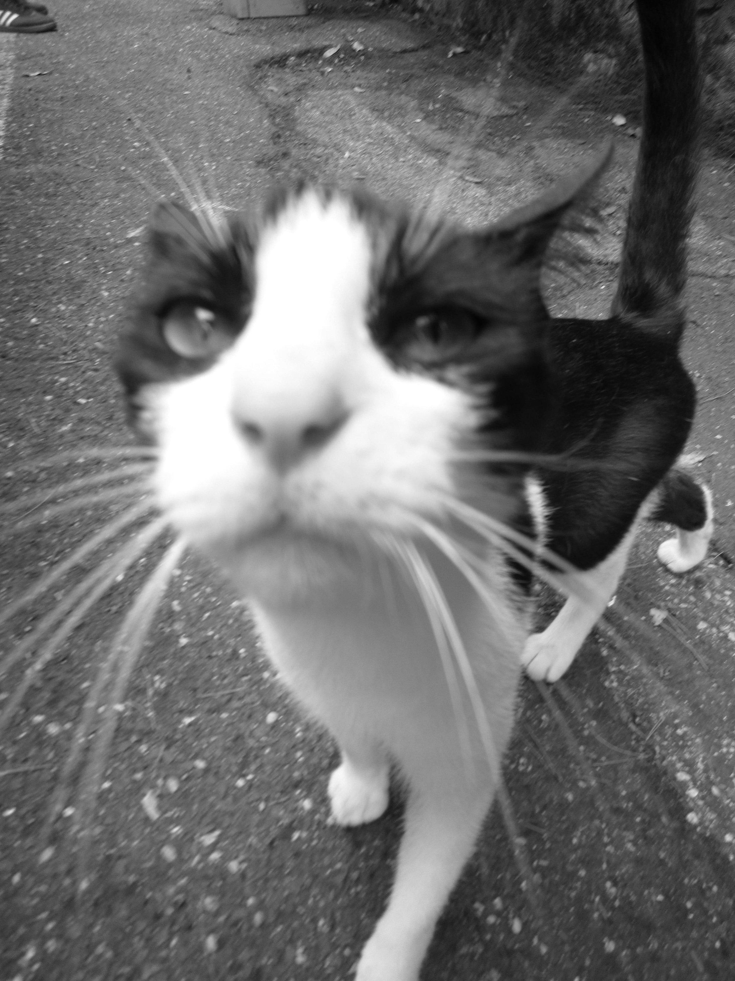 gatto di roma.jpg