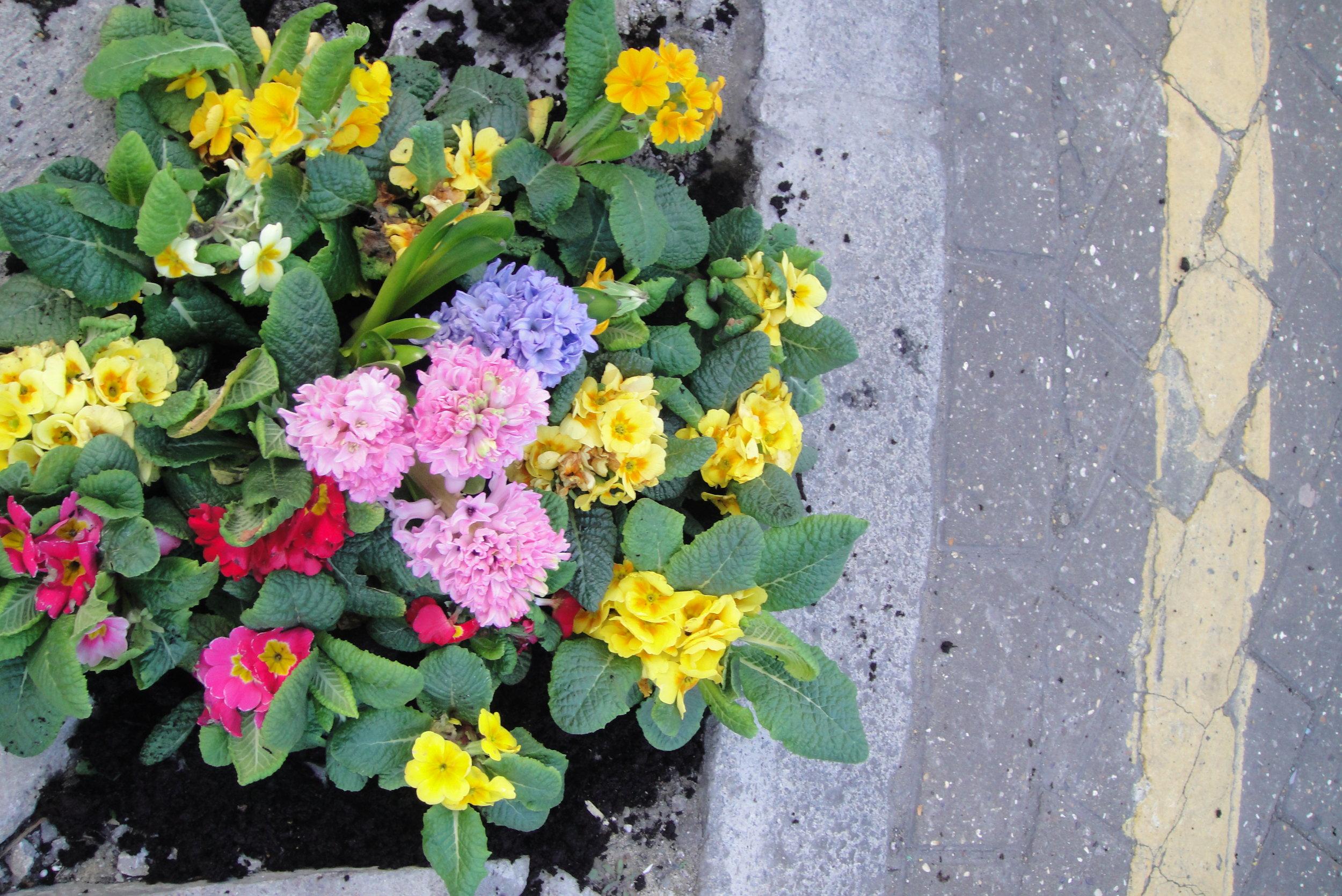 pothole garden homebase