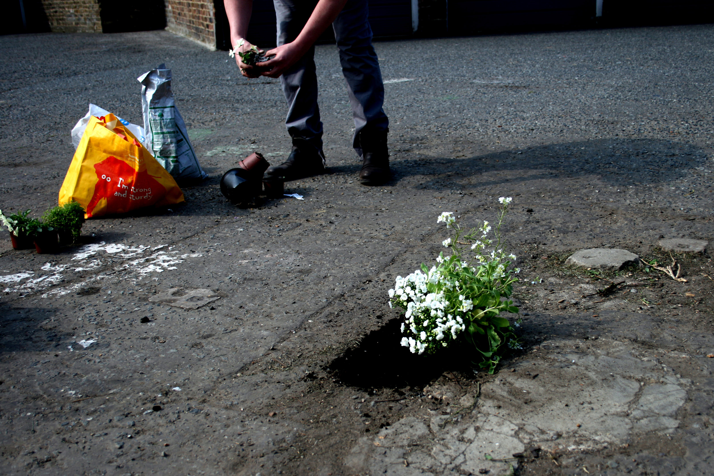 Royal Pothole garden