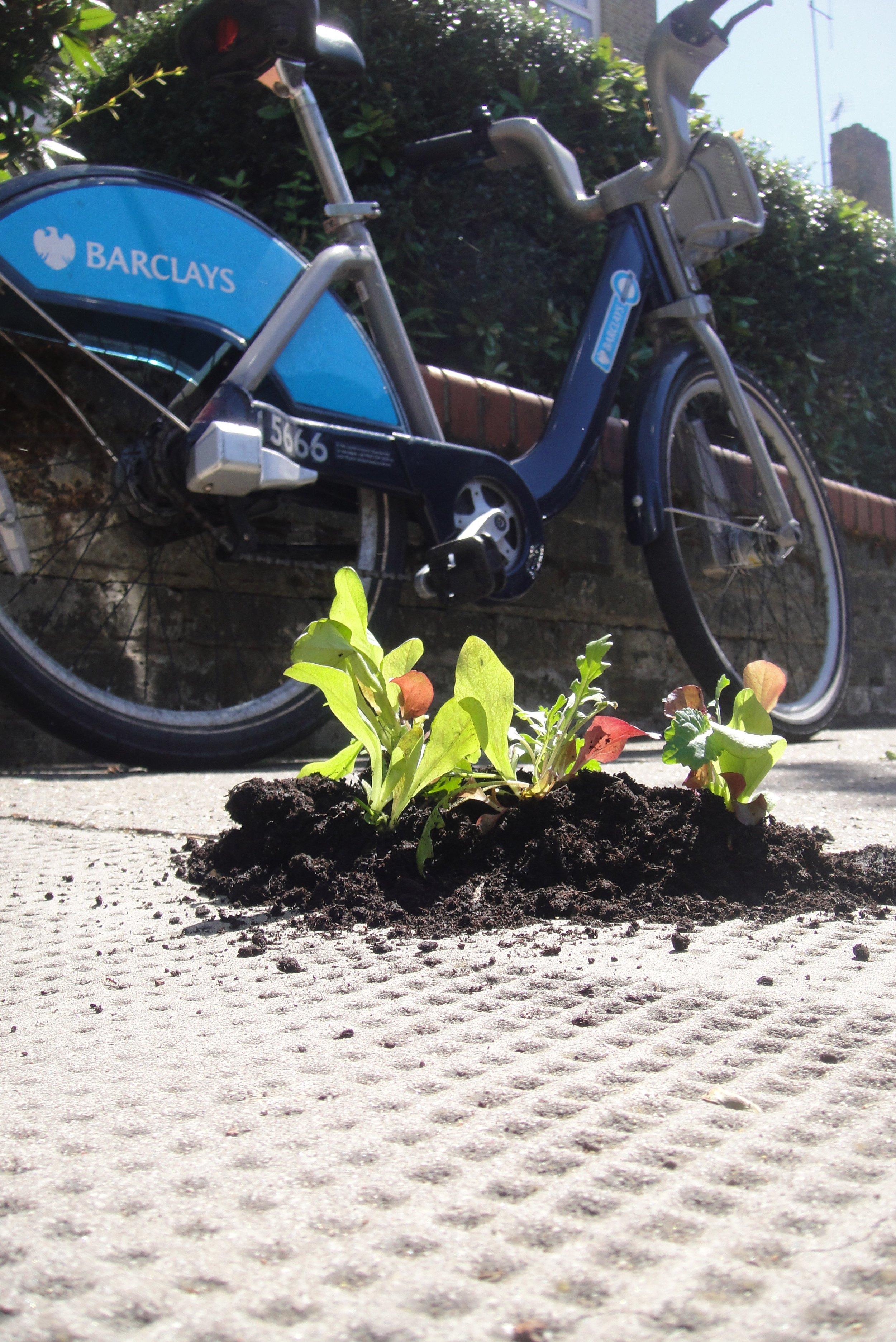 Veggie pothole garden