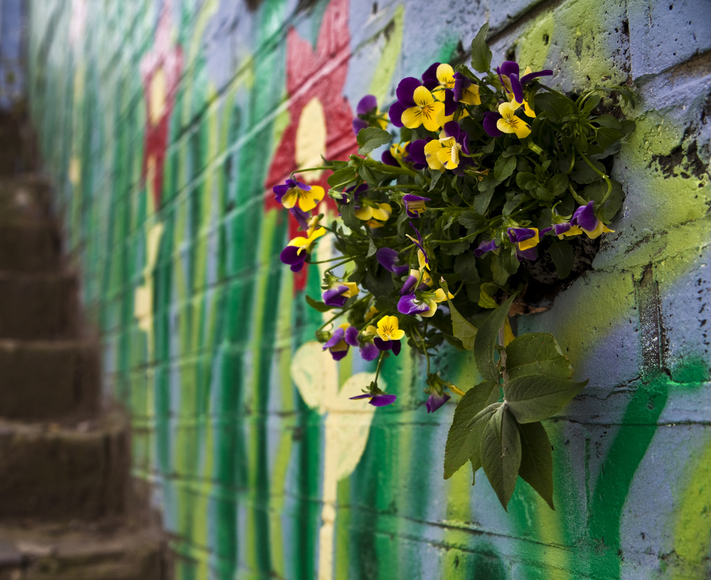 wall garden east london pothole gardener pansies