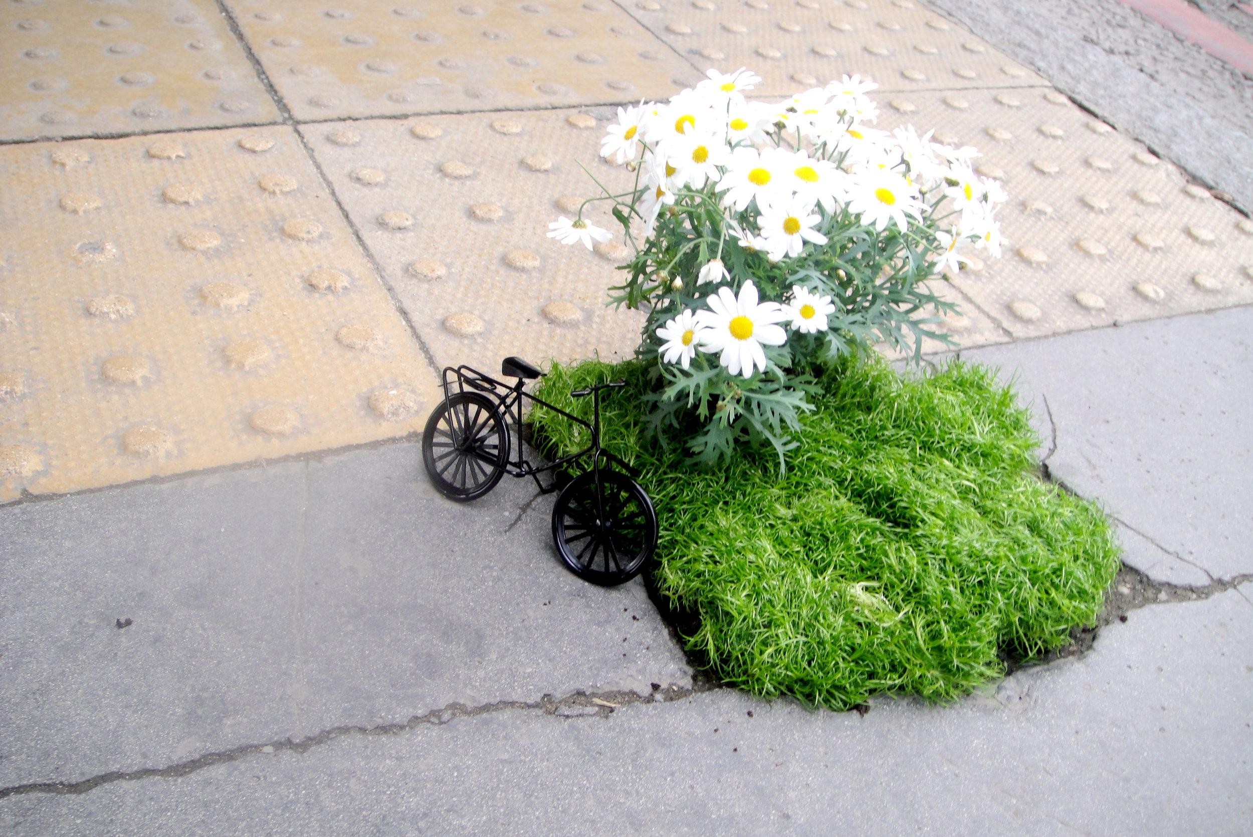 pothole garden bike south london mini garden road steve wheen people looking daisy