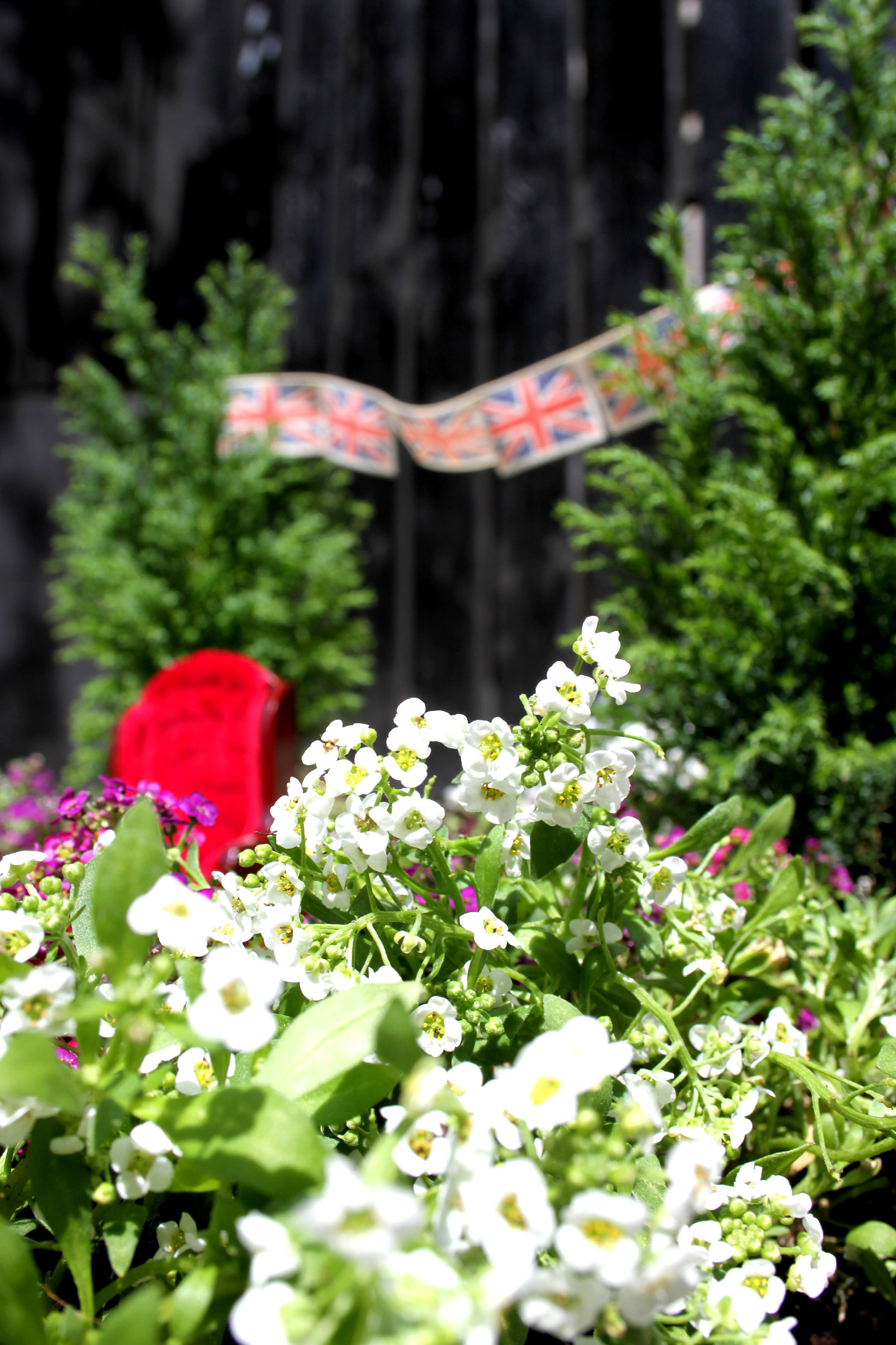Queens Jubilee Pothola garden steve wheen 1