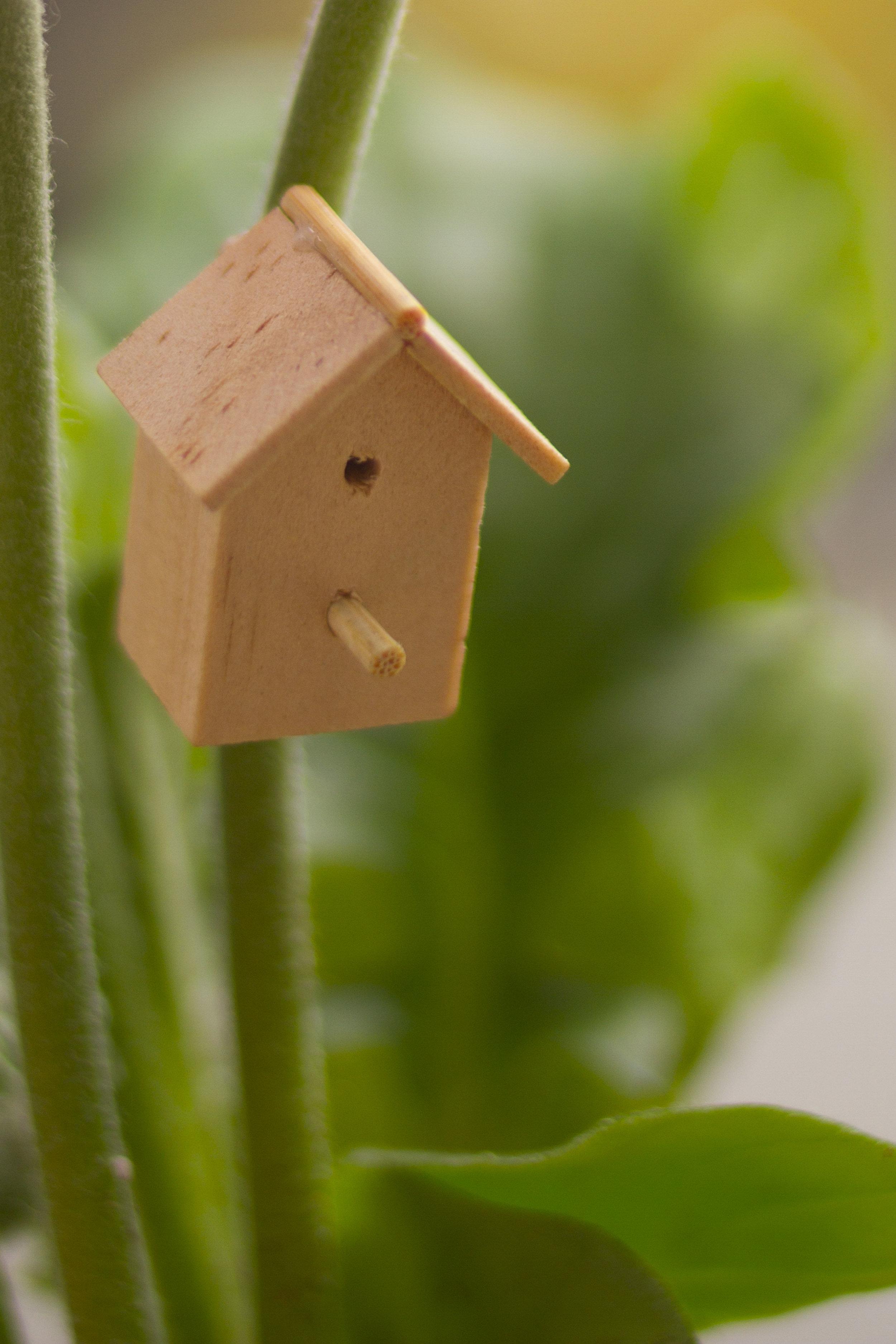 bird box barbican