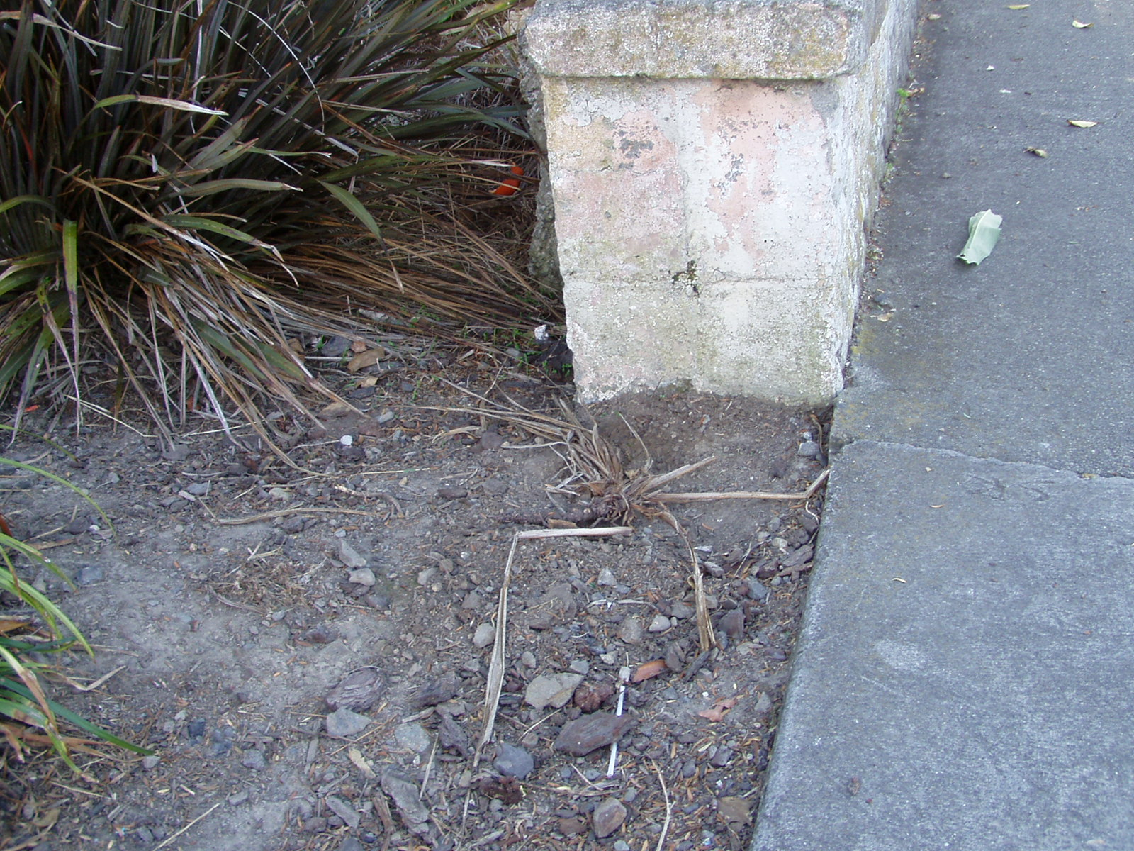 Pothole garden - NEW ZEALAND