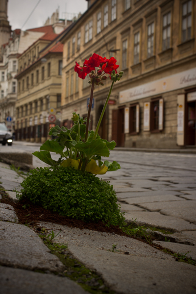 Prague-Pothole-Garden-CU