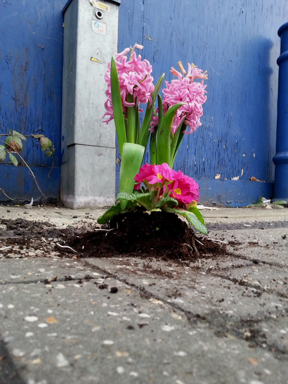 Pothole-Gardener-Valentines-Day-Vauxhall-London