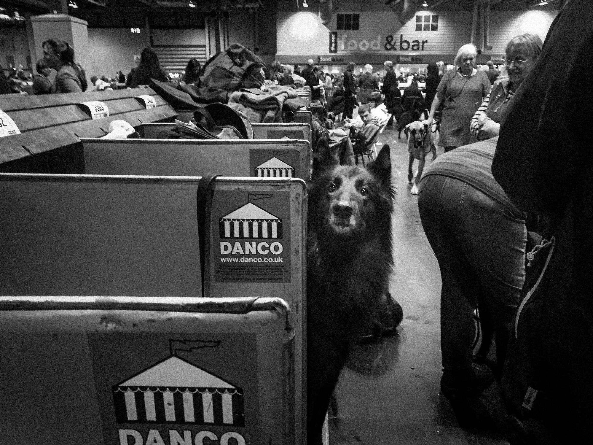 the-dog-show-2.jpg