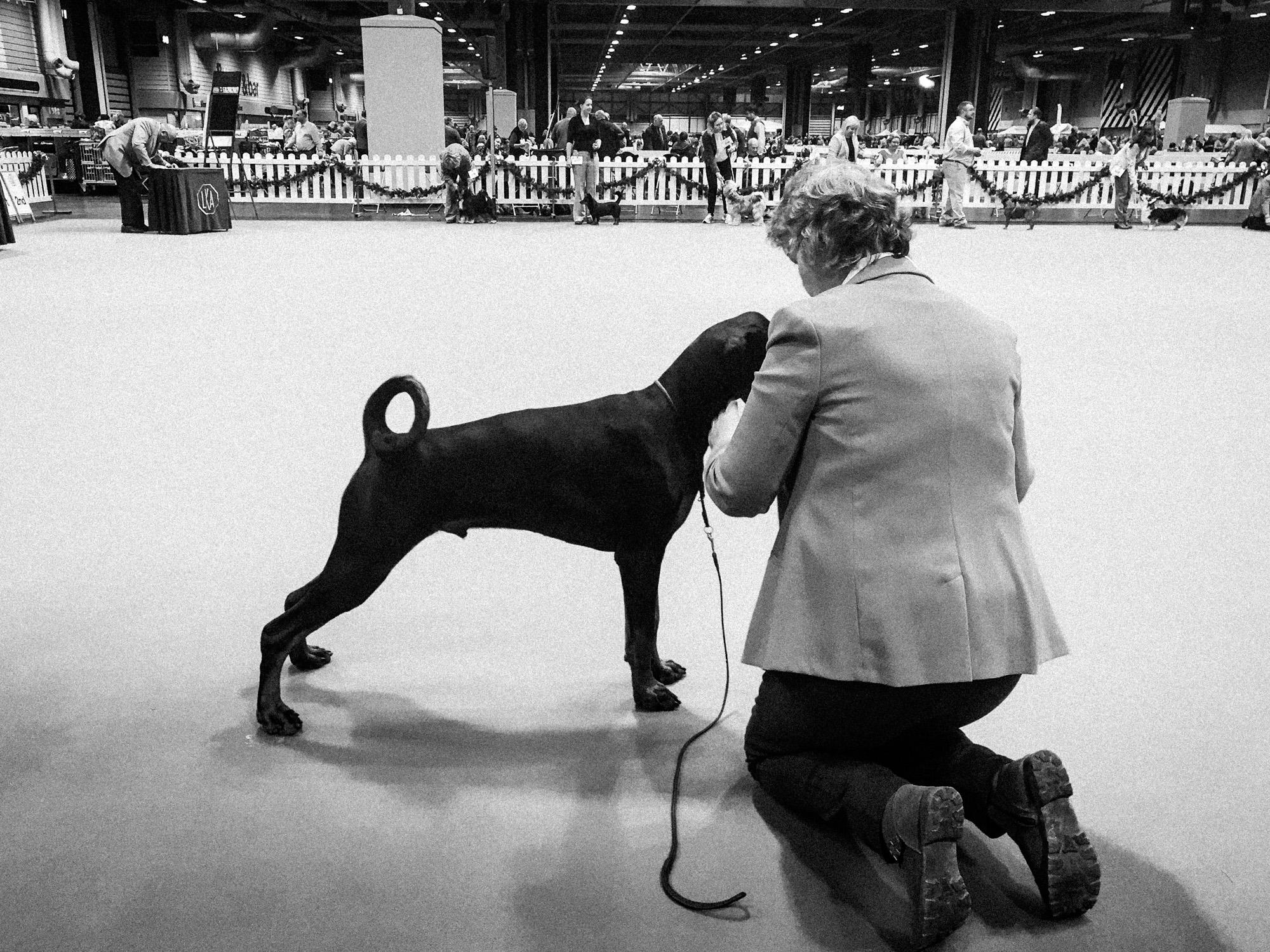 the-dog-show-7.jpg