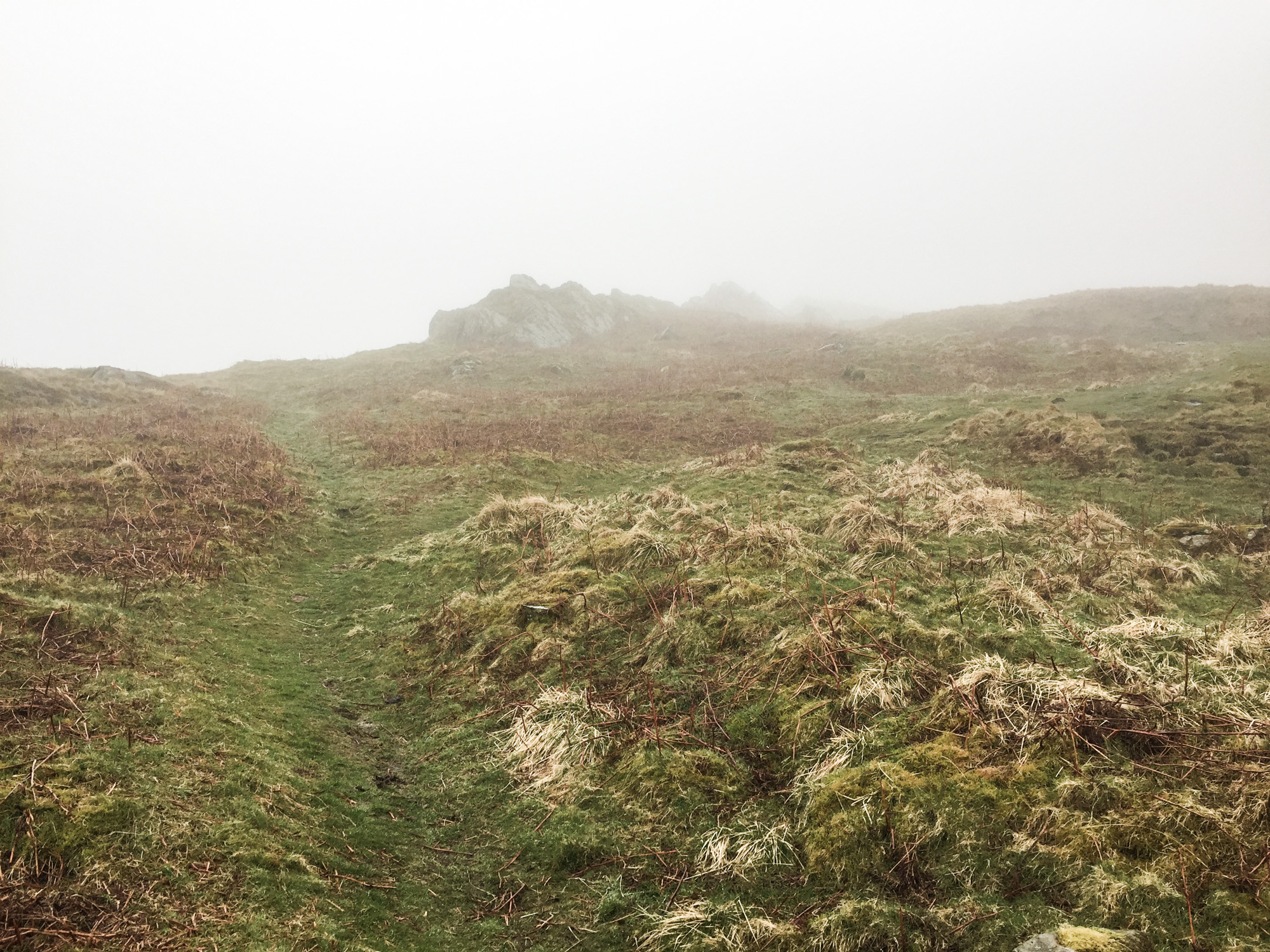 Soft, plush path up the fell