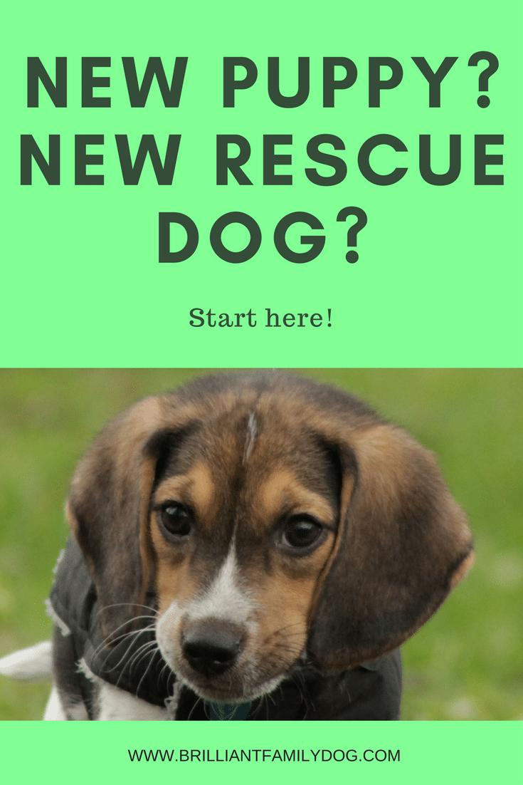 New Puppy? New Rescue Dog? FREE EMAIL COURSE | #newpuppy, #newrescuedog, #dogtraining | www.brilliantfamilydog.com
