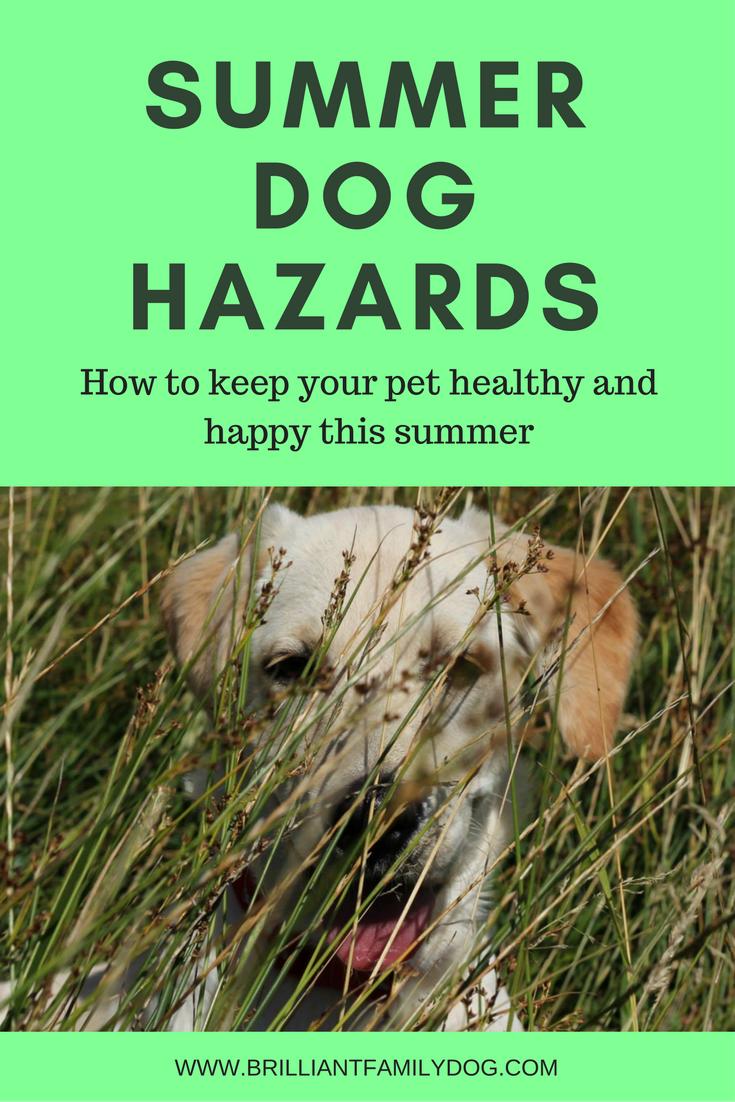 Dog training, new puppy, dog health | Summer dog hazards to be aware of | FREE EMAIL COURSE | #newpuppy, #dogtraining, #puppytraining | www.brilliantfamilydog.com