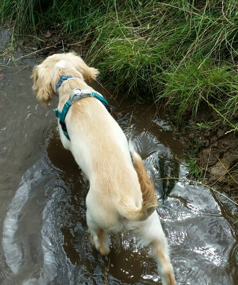 A cool stream is the perfect place for a hot puppy
