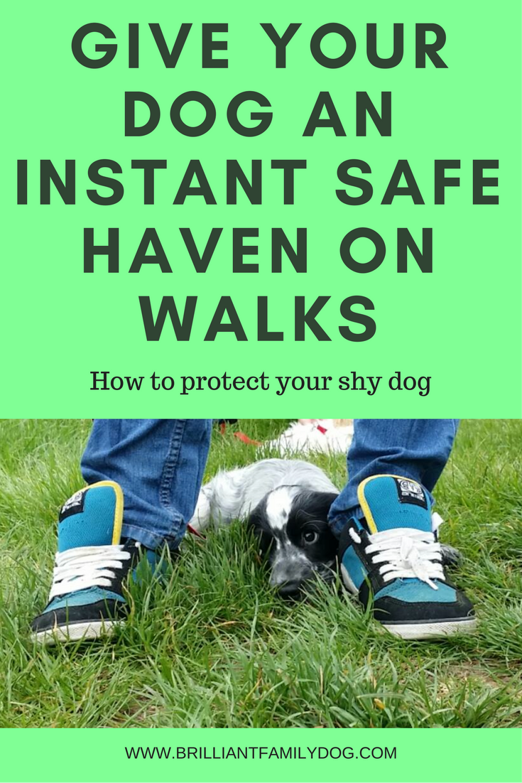 Your puppy needs a safe haven and between your feet is ideal
