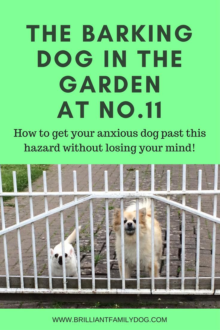 Dogs barking at their garden gate