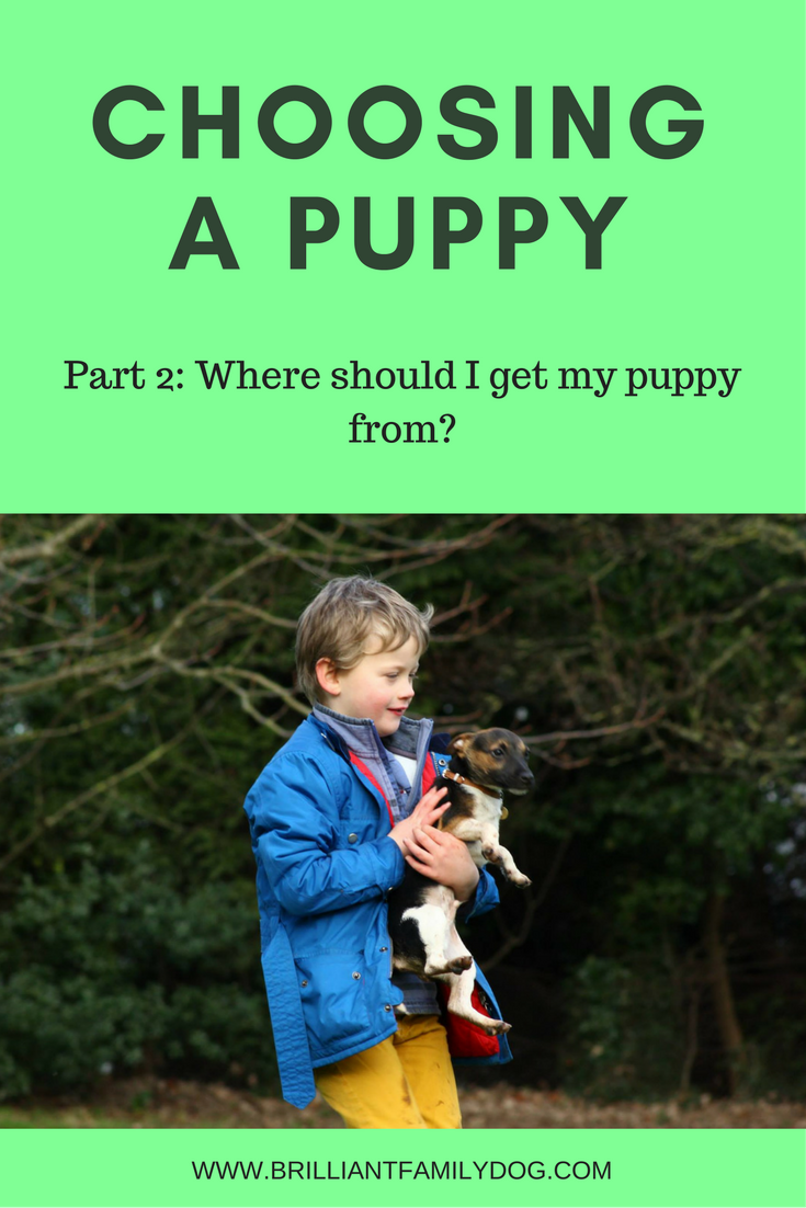 New Puppy? | Choosing a puppy Part 2 | FREE EMAIL COURSE | #newpuppy, #puppypottytraining, #puppytraining | www.brilliantfamilydog.com