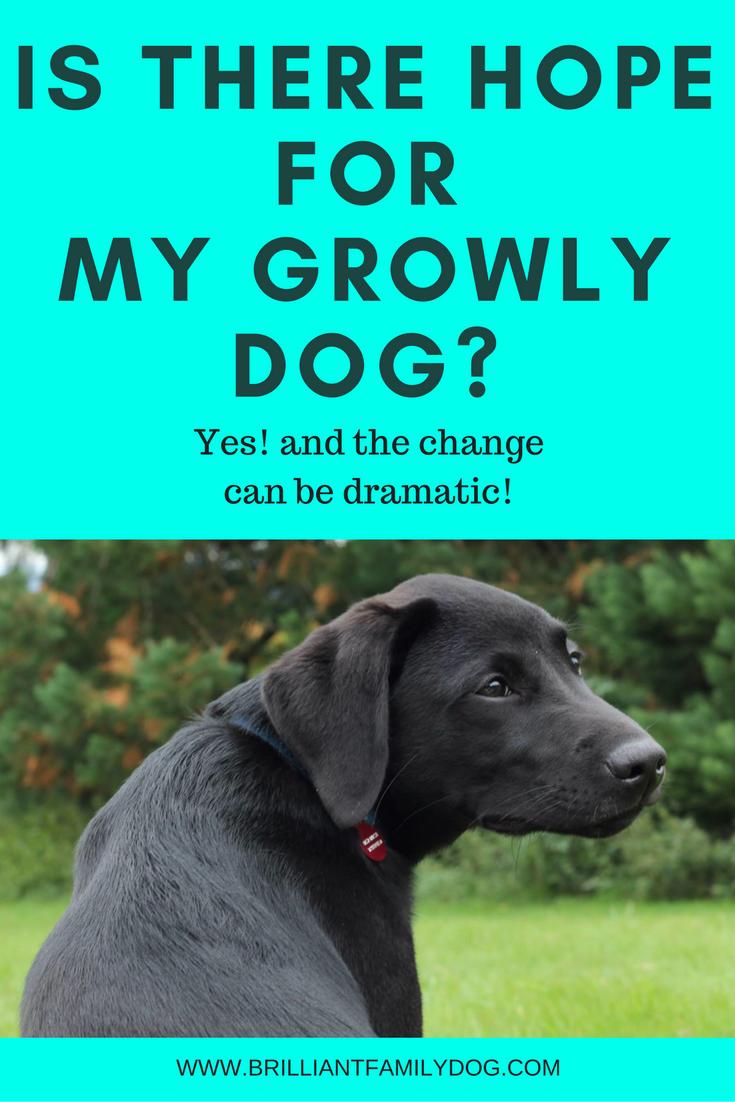 Reactive dog, aggressive dog, growly dog | Is there hope for my reactive and aggressive dog? | FREE EMAIL COURSE | #aggressivedog, #aggressivedog, #dogtraining, #growlydog | www.brilliantfamilydog.com|
