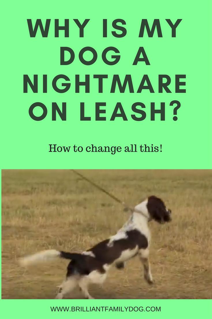 Reactive dog, aggressive dog, fearful dog |Why is my dog a nightmare on leash? | FREE EMAIL COURSE | #aggressivedog, #newrescuedog, #dogtraining | www.brilliantfamilydog.com