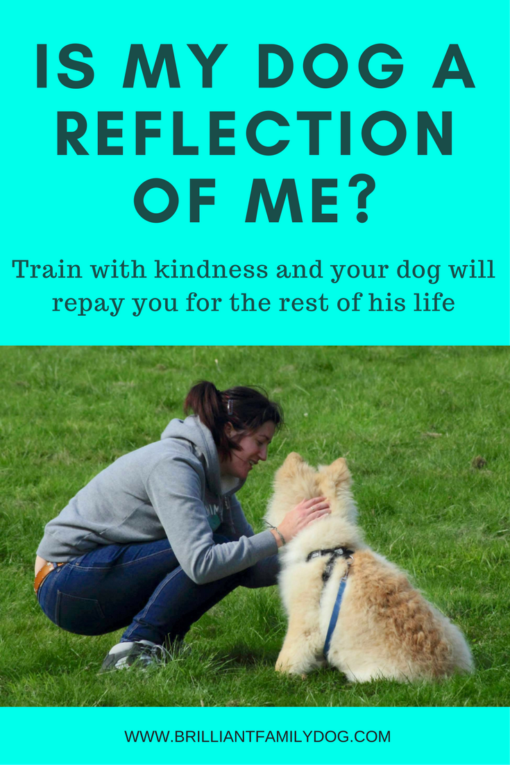 Dog training, new puppy, puppy training, dog behavior | Train with kindness and your dog will repay you for the rest of his life | FREE EMAIL COURSE | #newpuppy, #dogtraining, #puppytraining, #dogbehavior | www.brilliantfamilydog.com
