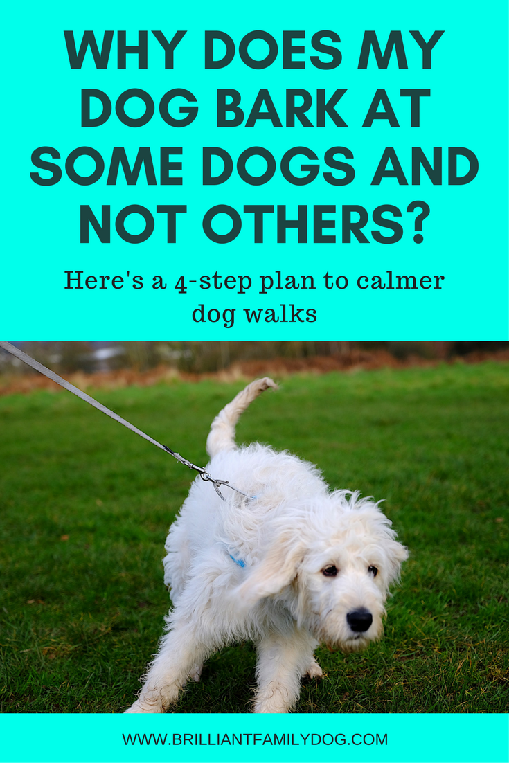 Reactive dog, aggressive dog, fearful dog, dog behavior | Why does my dog bark at some dogs and not others? | FREE EMAIL COURSE | #aggressivedog, #reactivedog, #dogtraining, #growlydog | www.brilliantfamilydog.com