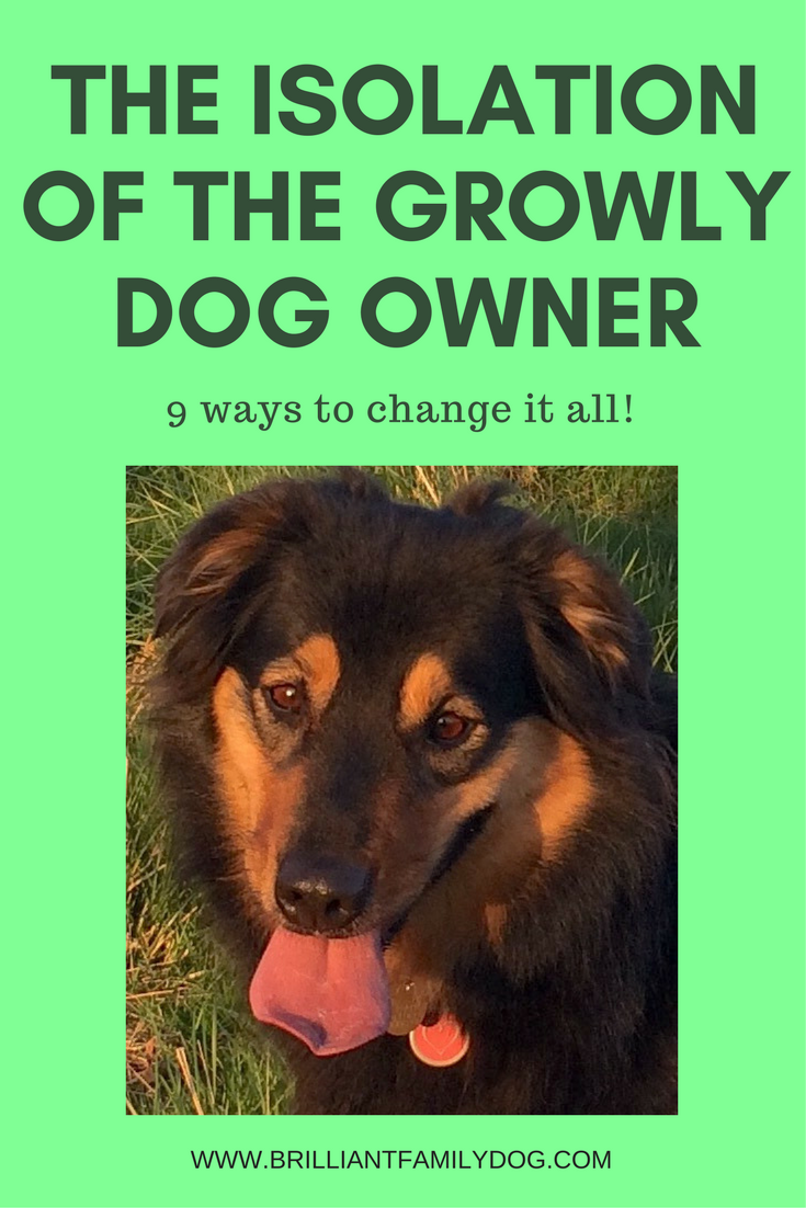 Reactive dog, aggressive dog, fearful dog, dog behavior | Do you feel isolated with your Growly Dog? You are so not alone! | FREE EMAIL COURSE | #aggressivedog, #reactivedog, #dogtraining, #growlydog | www.brilliantfamilydog.com
