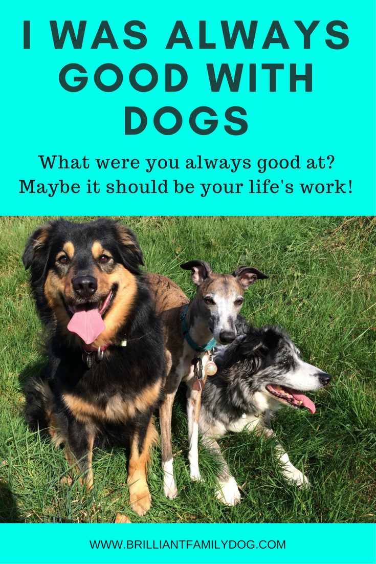 Dog training, new puppy, puppy training, dog behavior | If you're great with dogs, maybe you should consider studying and making dogs your career? | FREE EMAIL COURSE | #newpuppy, #dogtraining, #puppytraining, #dogbehavior | www.brilliantfamilydog.com