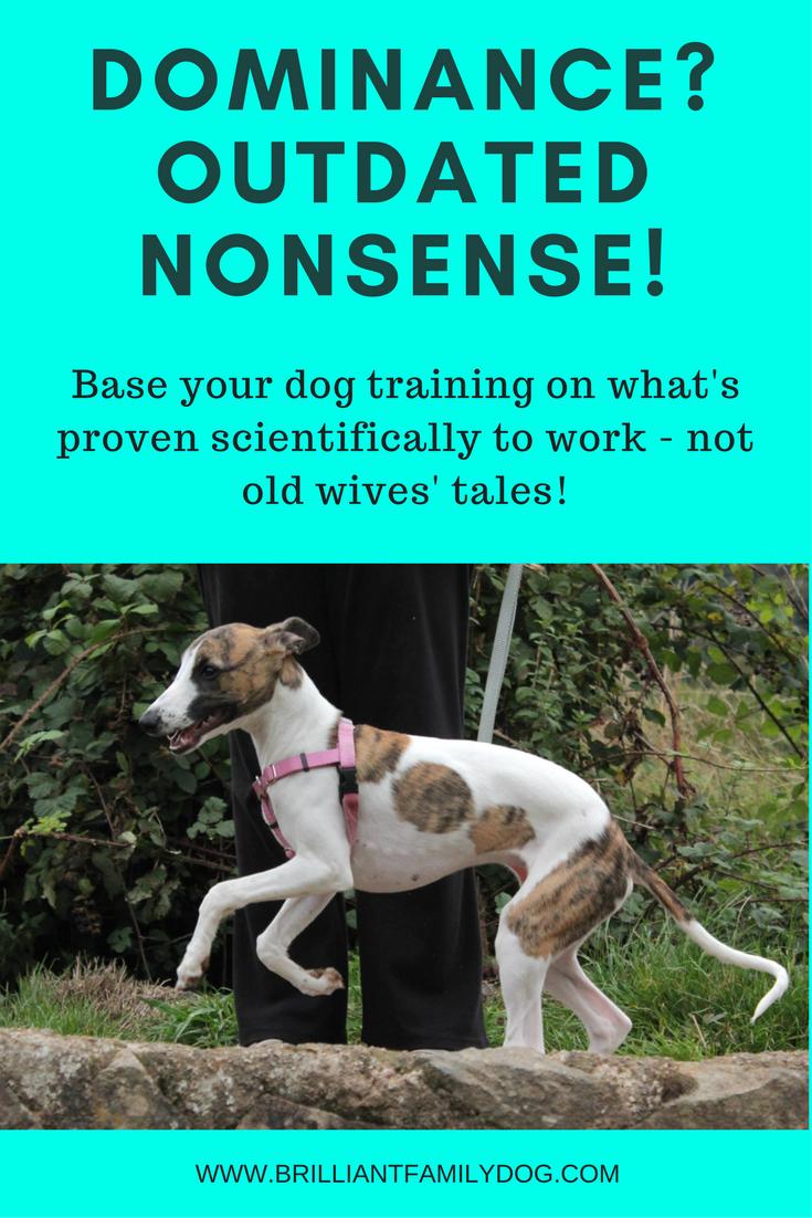 Reactive dog, aggressive dog, fearful dog, dog behavior | Dominance? Dog wants to rule you? Nonsense! That's not how dogs think | FREE EMAIL COURSE | #aggressivedog, #reactivedog, #dogtraining, #growlydog | www.brilliantfamilydog.com