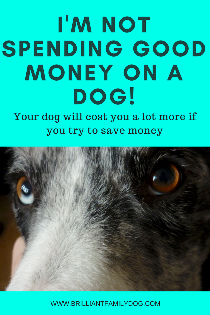 Dog training, new puppy, puppy training, choosing a puppy | Don't try to save money on getting your new dog - he'll cost you more in the long run! | FREE EMAIL COURSE | #newpuppy, #dogtraining, #newrescuedog, #puppytraining, #dogbehavior | www.brilliantfamilydog.com