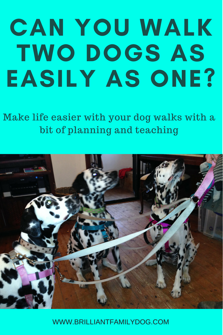 Dog training, new puppy, puppy training, two dogs | Can you walk two dogs as easily as one? With a bit of training you can! | FREE EMAIL COURSE | #newpuppy, #dogtraining, #newrescuedog, #puppytraining, #dogbehavior | www.brilliantfamilydog.com
