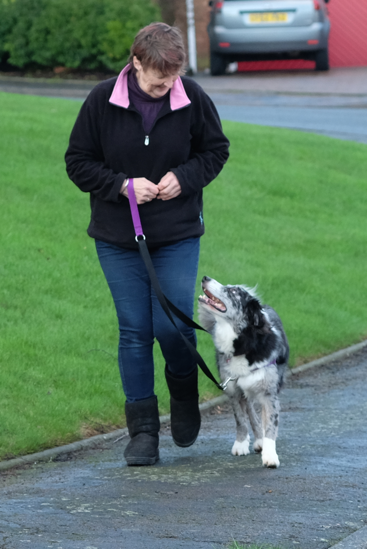 Dog training, new puppy, puppy training, two dogs   Can you walk two dogs as easily as one? With a bit of training you can!   FREE EMAIL COURSE   #newpuppy, #dogtraining, #newrescuedog, #puppytraining, #dogbehavior   www.brilliantfamilydog.com