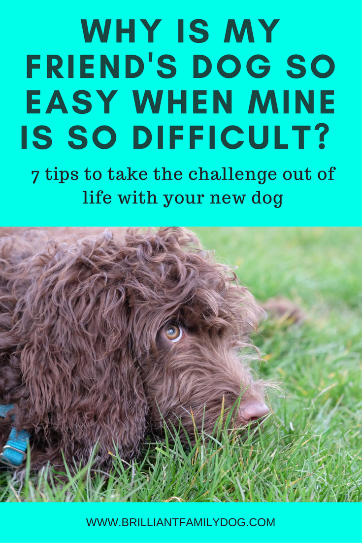 Dog training, new puppy, puppy training | Difficult dog? Stubborn dog? 7 DOG TRAINING TIPS to make life easier for both of you | FREE EMAIL COURSE | #newpuppy, #dogtraining, #newrescuedog, #puppytraining, #dogbehavior | www.brilliantfamilydog.com