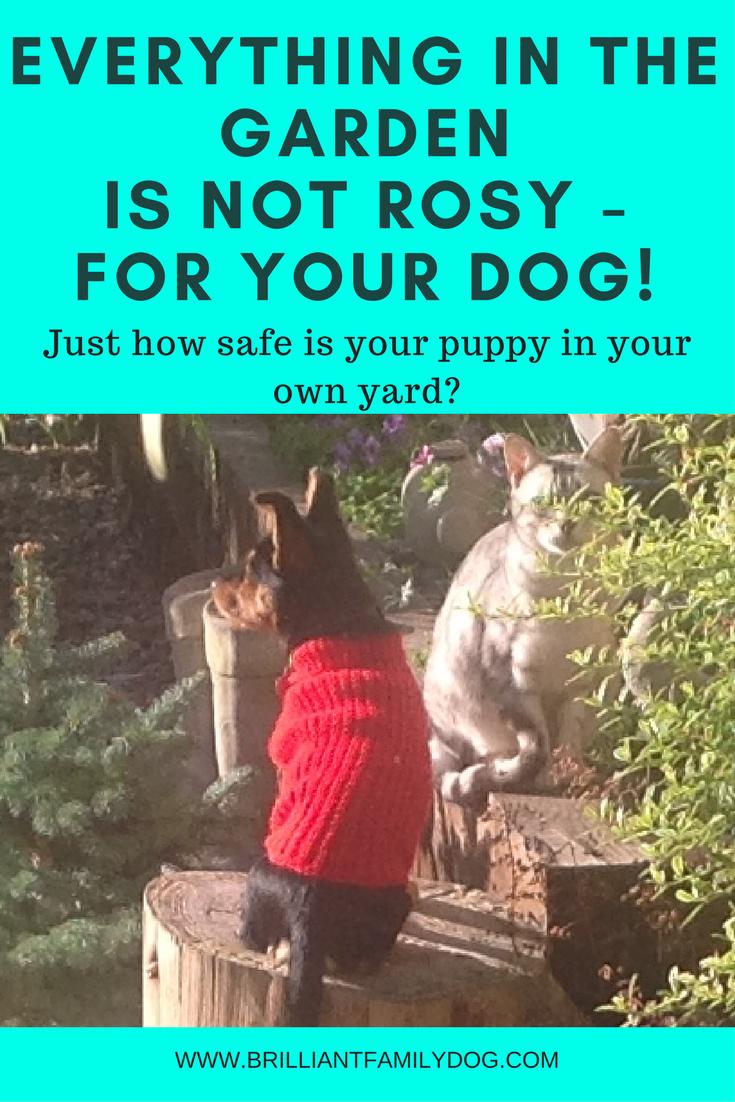Dog training, new puppy, puppy training, dog health | How safe is your garden or yard for your dog? | CHECKLIST AND RESOURCES | #newpuppy, #dogtraining, #newrescuedog, #doghealth, #dogbehavior | www.brilliantfamilydog.com