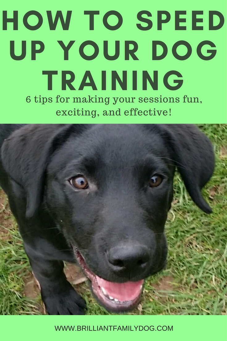 Dog training, new puppy, puppy training | How to speed up your dog training: 6 DOG TRAINING TIPS to make your training fast, fun, and efficient | FREE EMAIL COURSE | #newpuppy, #dogtraining, #newrescuedog, #puppytraining, #dogbehavior | www.brilliantfamilydog.com