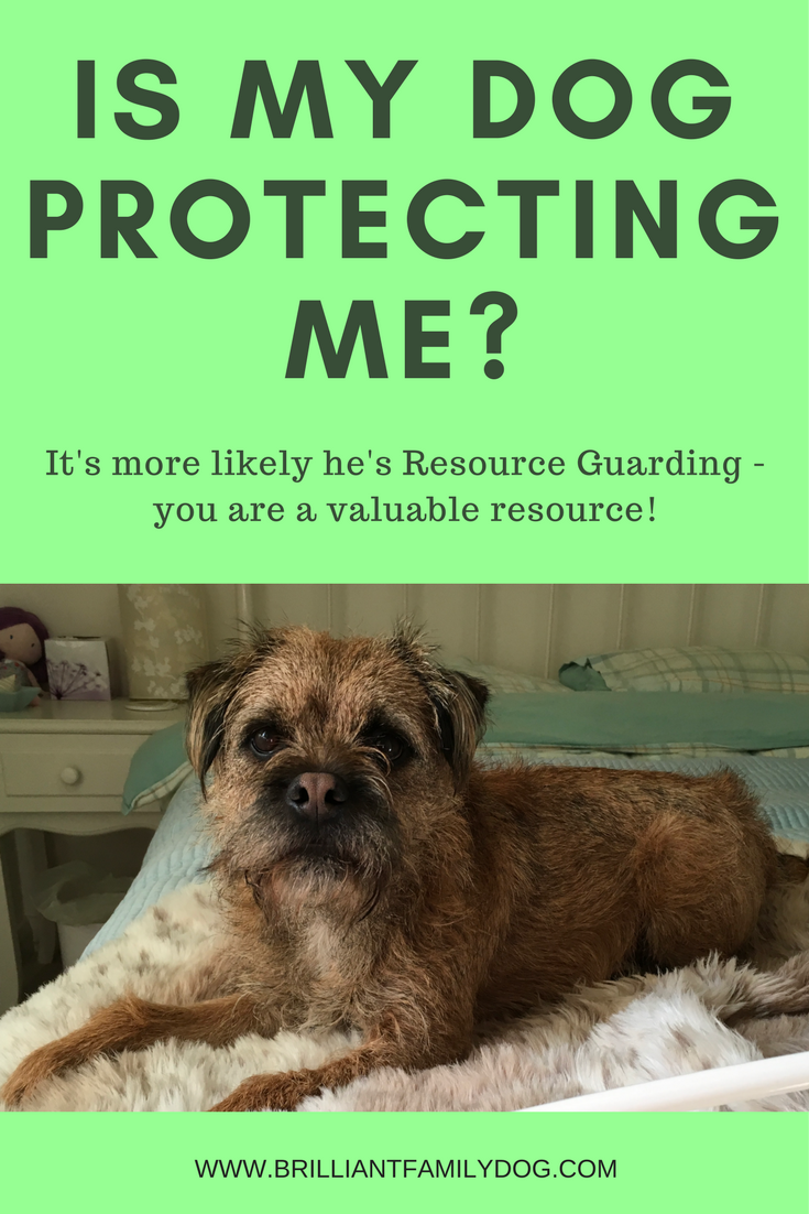 Reactive dog, aggressive dog, fearful dog, dog behavior | Is my dog protecting me? It's more likely he's resource guarding you as a valuable resource | FREE EMAIL COURSE | #aggressivedog, #reactivedog, #dogtraining, #growlydog | www.brilliantfamilydog.com