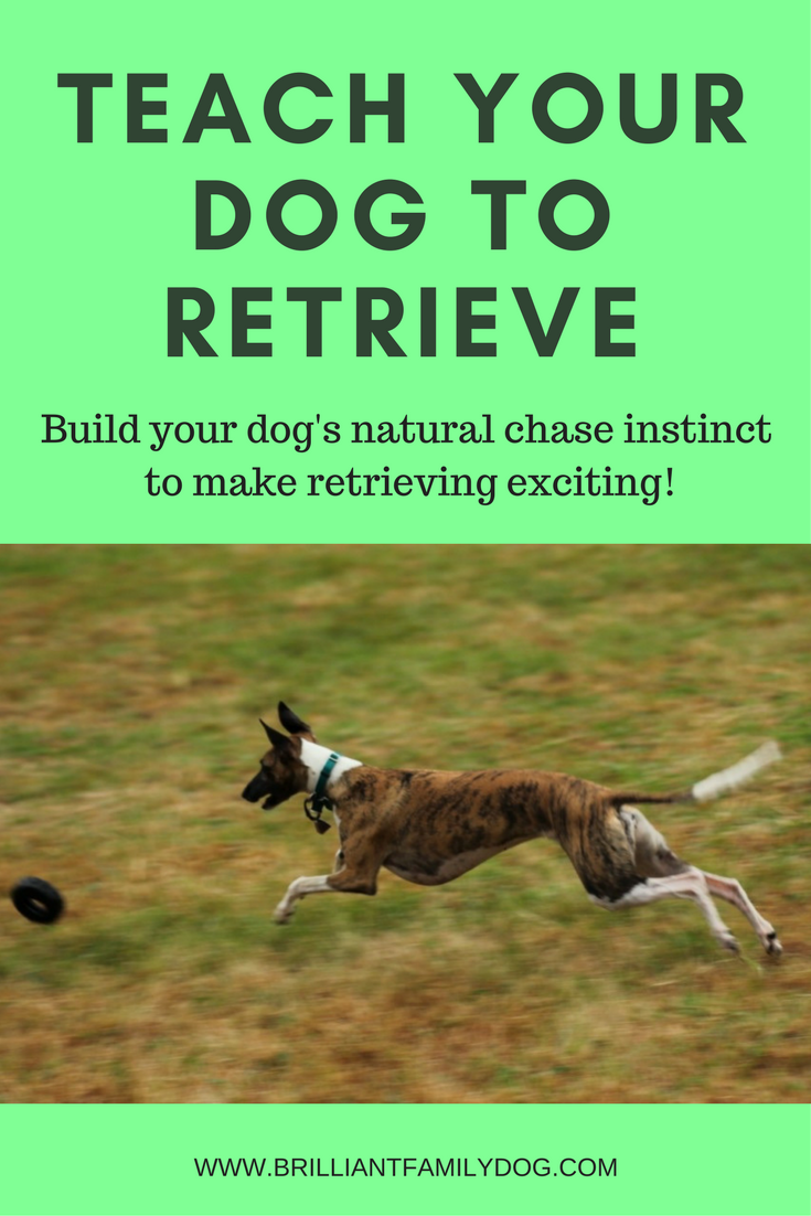 Dog training, new puppy, puppy training, dog retrieve training | Teach your dog to retrieve, fetch, and bring things back | FREE EMAIL COURSE | #newpuppy, #dogtraining, #newrescuedog, #puppytraining, #dogbehavior | www.brilliantfamilydog.com