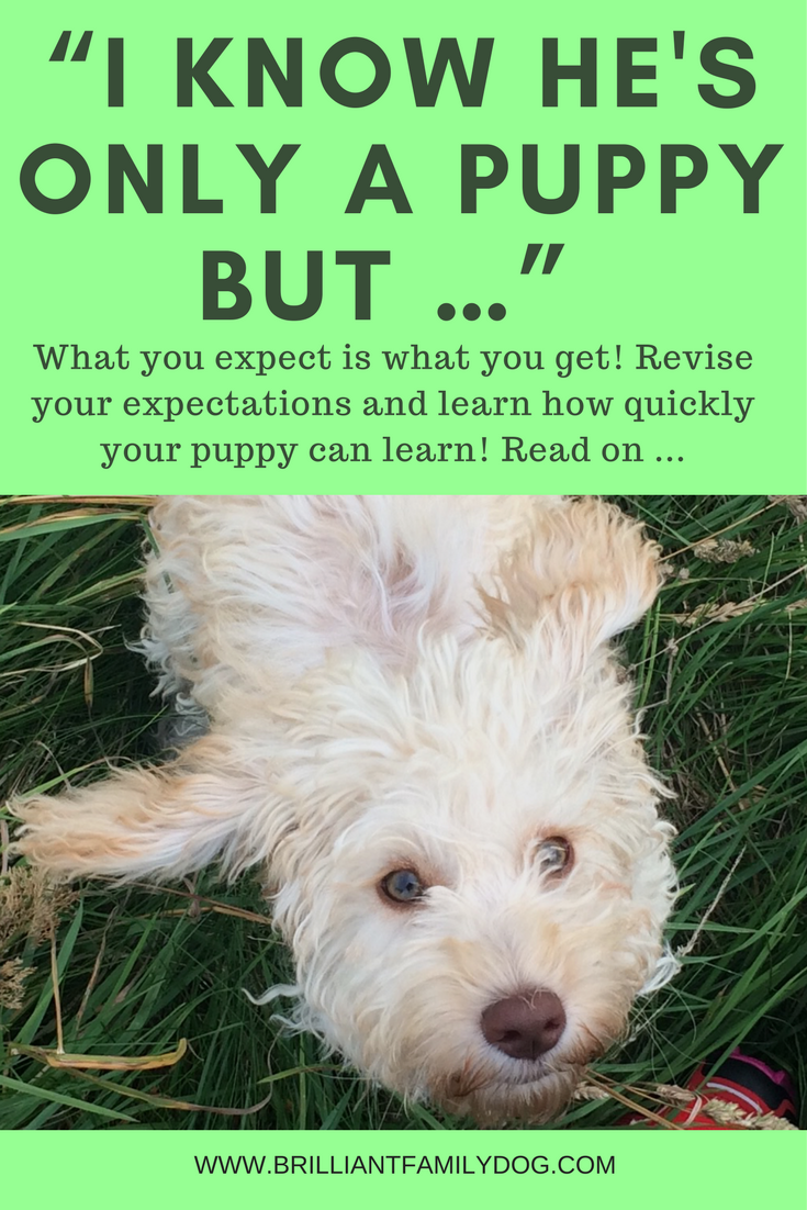 New Puppy? | Superb online Puppy Training Course with daily video lessons! | CLICK FOR DETAILS | #newpuppy, #puppypottytraining, #puppytraining | www.brilliantfamilydog.com