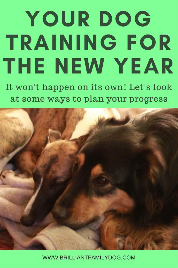 Dog training, puppy training, 2018 | Plan your dog training year now | ONLINE COURSE | #dogtraining, #puppytraining | www.brilliantfamilydog.com