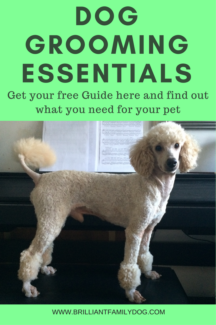 Dog grooming, dog behavior, choosing a puppy | Find out what you really need and don't need to groom your pet | FREE GUIDE | #doggrooming, #nrepuppy | www.brilliantfamilydog.com