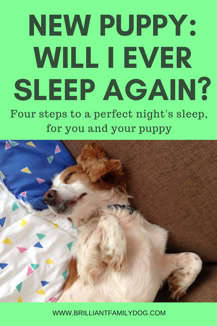 New puppy, puppy training, puppy potty training | Four steps to a perfect night's sleep, for you and your puppy | FREE GUIDE! | #newpuppy, #puppytraining, #puppycrying | www.brilliantfamilydog.com