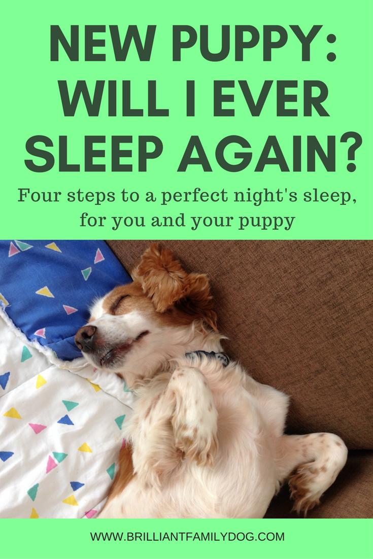 I Have A New Puppy Will I Ever Get Any Sleep Again Brilliant Family Dog