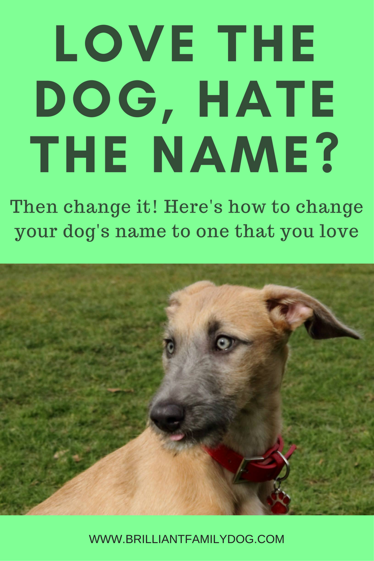 New dog, new rescue dog, new puppy, dog behavior | Love the dog, hate the name? Here's how to give him a new name that you all love! | FREE EMAIL COURSE | #newrescuedog, #newpuppy, #dognames | www.brilliantfamilydog.com